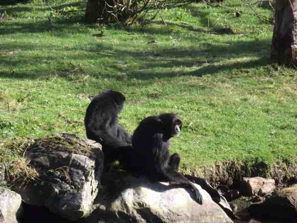 Animals at Fota Ireland