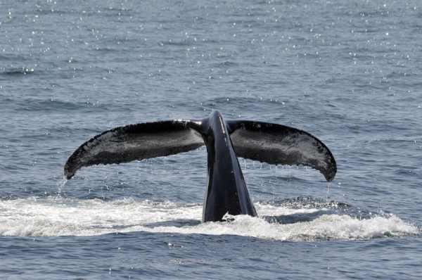 Whale season in Ireland