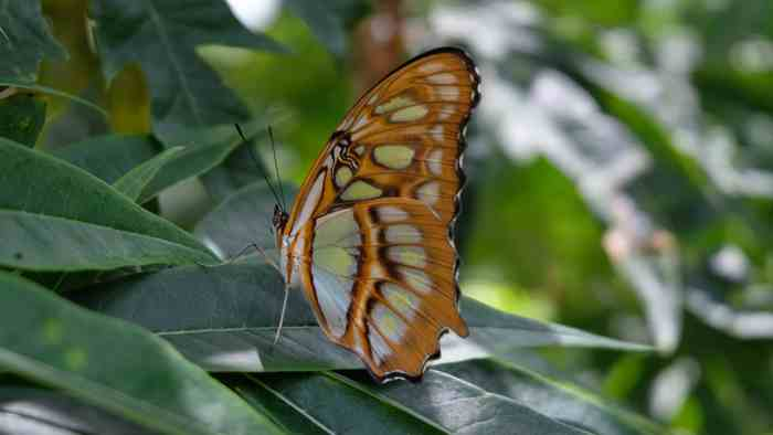 Things to do in Ometepe island butterfly sanctuary.