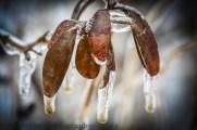Frozen thaw