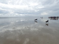morecambe-bay-walk-025