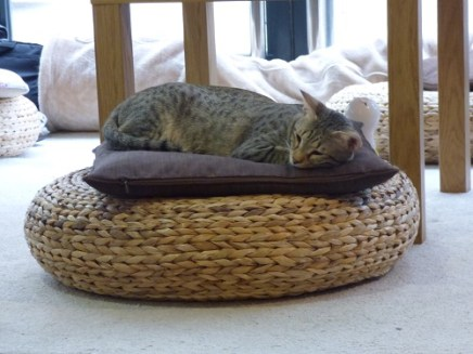 cat cafe manchester 009