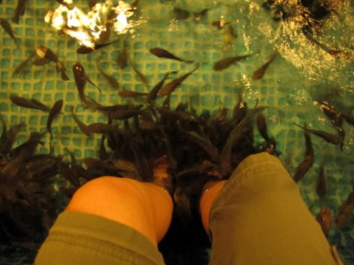 Without a doubt, the fish massage was the strangest sensation I have ever experienced. I swore I would never have a fish massage again, but afterwards, my feet felt incredible.