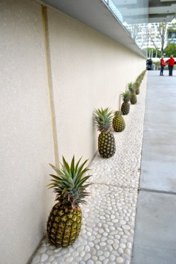 Pineapples...such a symbol of Queensland