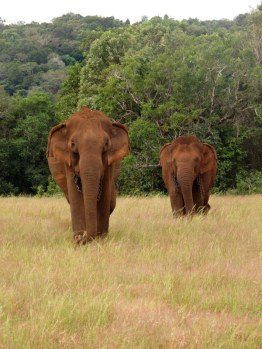 Elephant Valley Project Cambodia