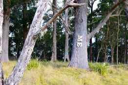 Spicers Peak Lodge bushland