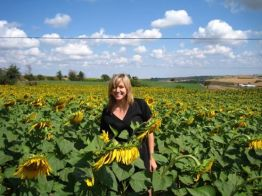 Turkish Sunflower field