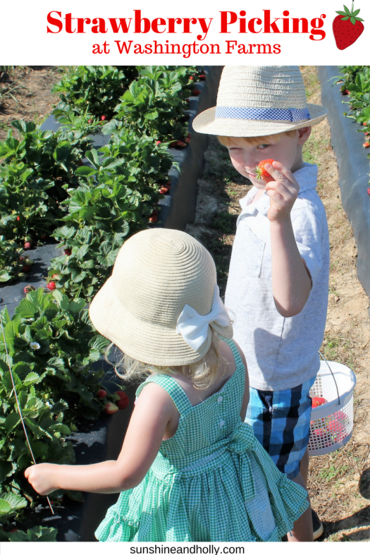 Strawberry Picking at Washington Farms | sunshineandholly.com