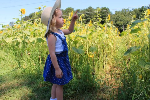 tips for visiting the sunflower farm | sunshineandholly.com | sunflower field | photography | sunflowers
