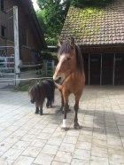 Livio mit Diana (Foto Schönmann)