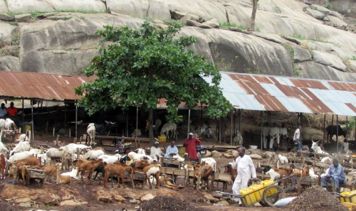 Zuma Rock Goat Market