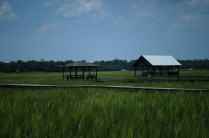 Gotta love that marsh!