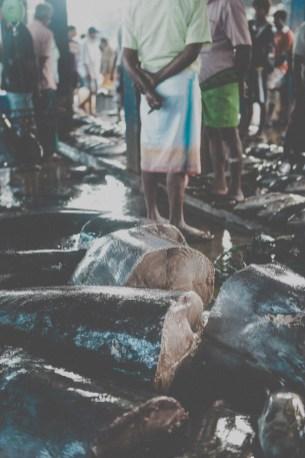 Sri Lanka-Surf-Medawatta-Dondra-Harbour-Tuna-Yellow-Fin-Sushi-Sashimi-Fresh-Burgers-Zephyr-Mirissa-IMG_7866