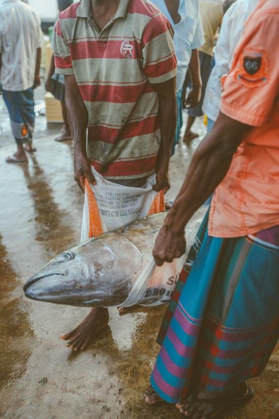Sri Lanka-Surf-Medawatta-Dondra-Harbour-Tuna-Yellow-Fin-Sushi-Sashimi-Fresh-Burgers-Zephyr-Mirissa-IMG_7874