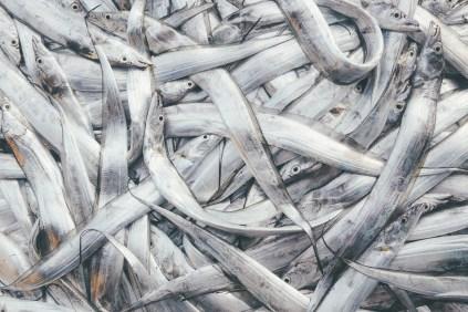 Sri Lanka-Surf-Medawatta-Dondra-Harbour-Tuna-Yellow-Fin-Sushi-Sashimi-Fresh-Burgers-Zephyr-Mirissa-IMG_7891