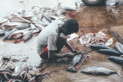 Sri Lanka-Surf-Medawatta-Dondra-Harbour-Tuna-Yellow-Fin-Sushi-Sashimi-Fresh-Burgers-Zephyr-Mirissa-IMG_7911
