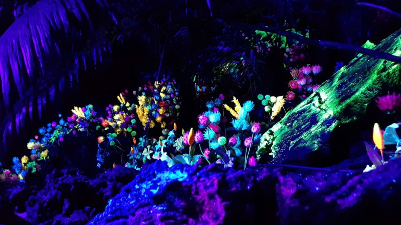 EXPERIENCE THE MAGIC OF NATURE ILLUMINATED LOST WORLD TAMBUN MAGICAL FOREST