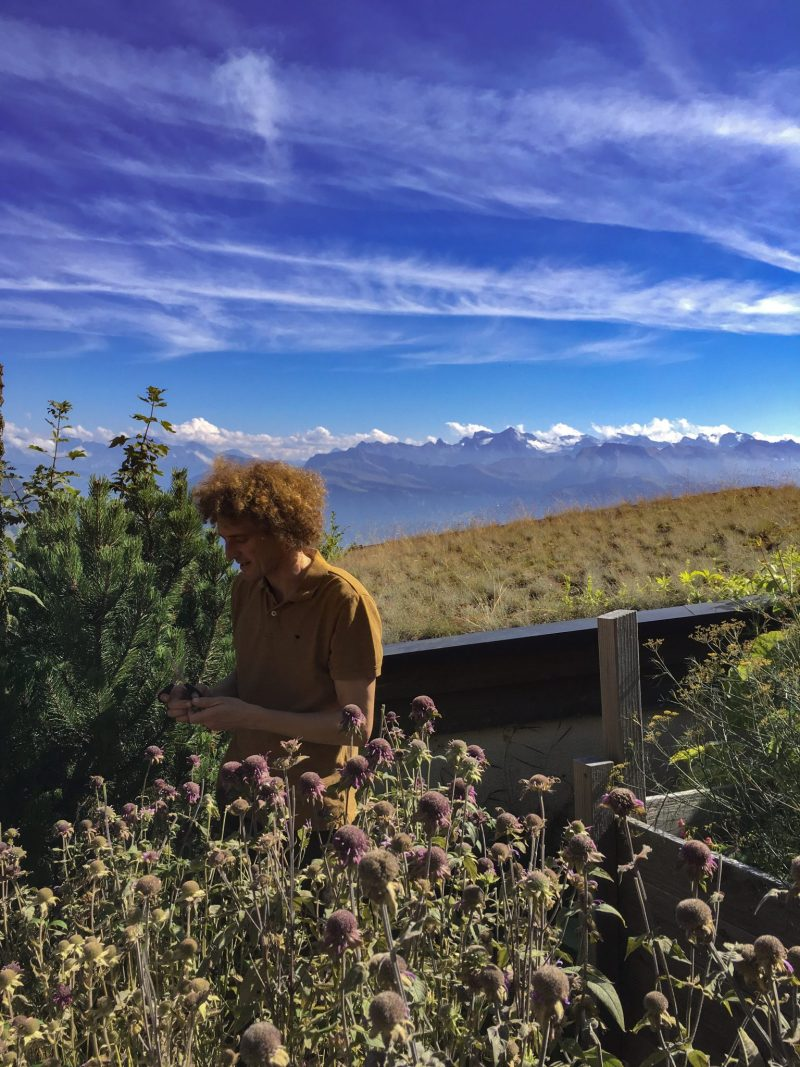 Krauter Hotel Edelweiss owner and herb specialist, Gregor Vörös, in the Alpine herb garden with secnis views the swiss alps behind