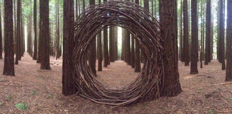 circular wooden formation in the middle of california redwood trees