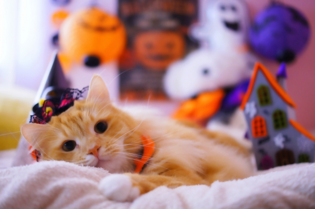 ハロウィンの仮装をする猫