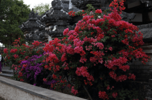 pink and purple flowers at the uluwatu temple