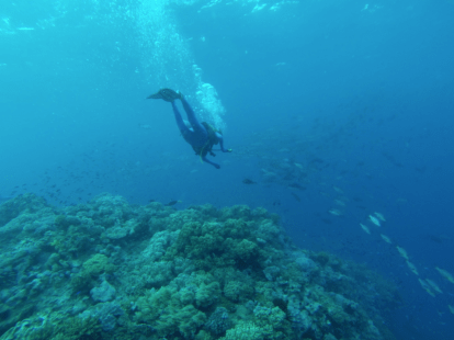 divers swimming over and under the coral