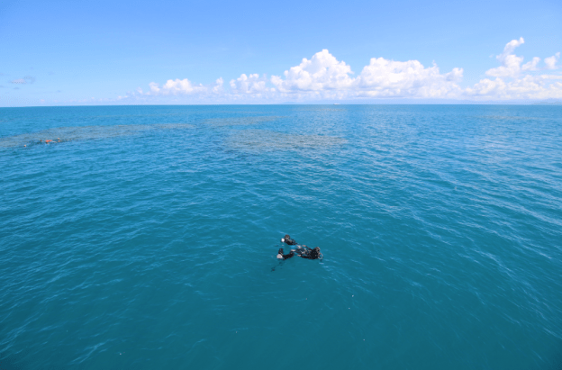 Divers in the water swimming toward the coral to dive with