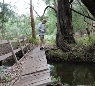 Dan looking into the stream after crossing a wonky bridge in the bushland near Dunsborough