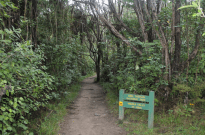 Sign for the hike through the park, trees hugging a dirt path