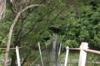 Walking the suspension bridge in the Abel Tasman National Park, one person at a time, water below and green trees surrounding