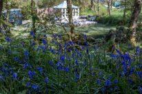 Darker blue bells with darker green bushes