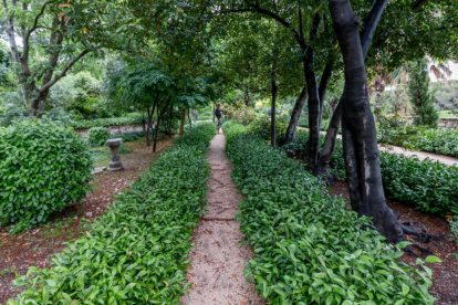 Vibrant green bushes and a narrow footpath through the gardens