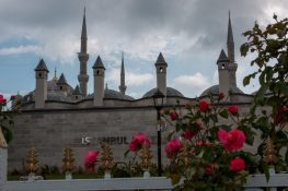 Red flowers and minarets in the background