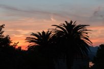 Palm trees and an orange sky thanks to the sunset