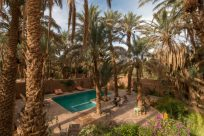Daytime shot of the hotel pool with date palms