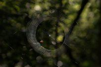 Spider web glistening in the morning light