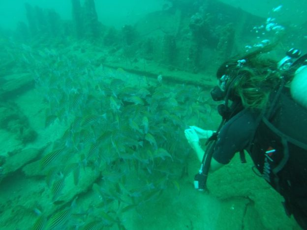 Tegs chasing fishes down below