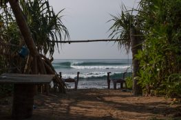 Surf framed by palm trees