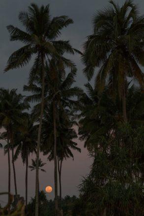 Palm tree silhouettes