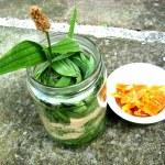 7 Remedii Naturiste pentru Pietre la Rinichi