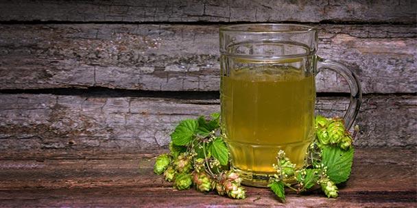 ceai de hamei, halba, frunze, planta,