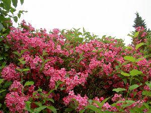 Die Unternehmensvision zur vollen Blüte bringen