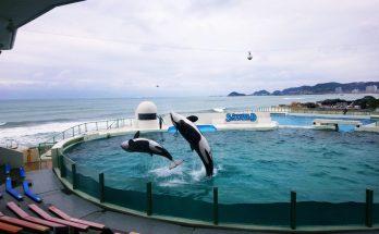 鴨川海洋世界虎鯨表演