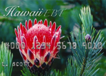 Hawaii EBT Card Balance