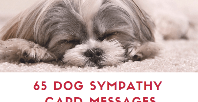 Dog Sympathy Card Messages