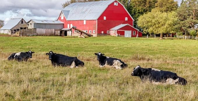 Farm Name Ideas