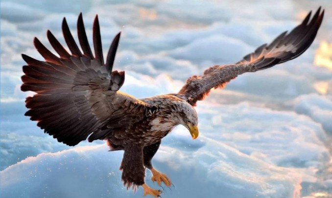 Positive Traits of Eagles