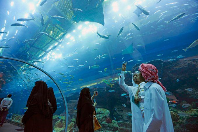 home aquarium in the world
