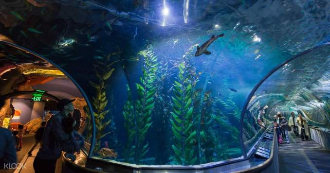 Best Home Aquarium in the World