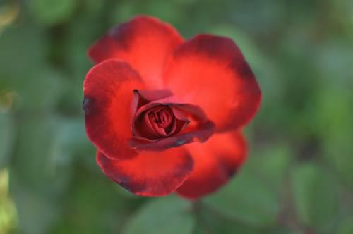floare58